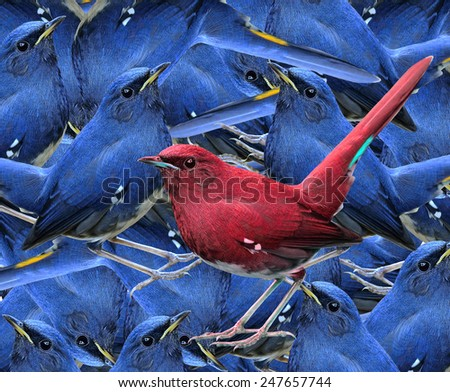 The Beautiful Red bird standing among the compilation of blue birds in background