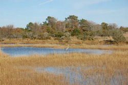 The beautiful scenery of Assateague Island, in Worcester County, Maryland.