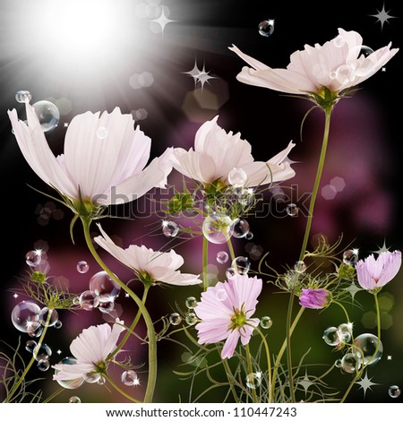 The beautiful spring flower over dark background