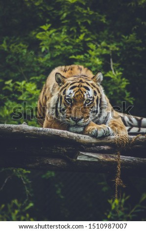 The beautiful wild life - Wild Animals Photography