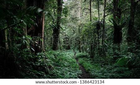 the beauty of adventure in the forest #1386423134