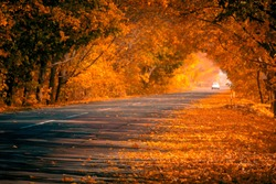 The beauty of autumn. Asphalt road in the autumn alley. Golden autumn maple leaves covering the roadsides. Focus on foreground.