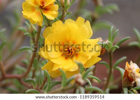 The beauty of nature, flower  #1189359514