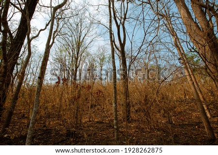 The beauty of the arid forest Photo stock ©