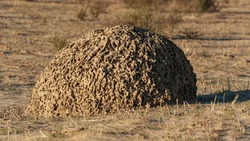 The beauty of the termite mound
