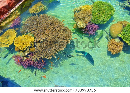 The beauty of the underwater world. Corals of Eilat. Israel stock photo