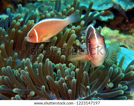 The beauty of underwater world in Sabah, Borneo. #1223147197