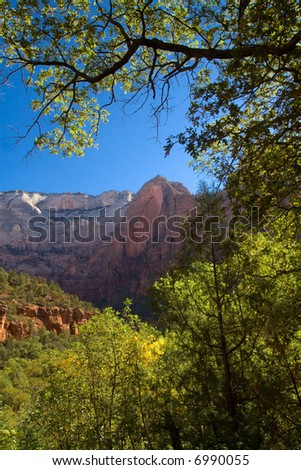 the beauty of Zion National Park - beautiful trees, deep blue sky, and rugged mountains