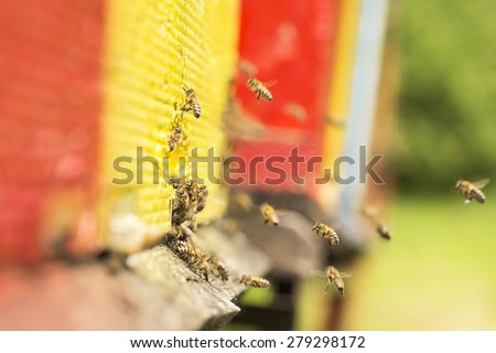 The bee was sipping the nectar and returning to beehive. Bees collects honey. Beehives on the meadow.