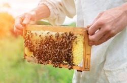 The beekeeper holds a honey cell with bees in his hands. Apiculture. Apiary