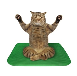 The beige cat athlete is doing yoga exercises on a green fitness mat. White background. Isolated.