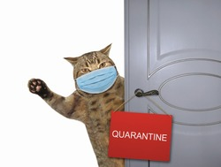 The beige cat in a surgical protection face masks closes the door of his house. A sign quarantine is hung on the door. Coronavirus. White background. Isolated.