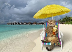 The beige cat is sitting in the beach chair under a yellow straw umbrella and drinking cocktail on the tropical beach of Maldives.