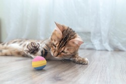 The bengal kitten is playing with a ball in the room.