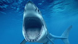 The Best of Shark and Ocean