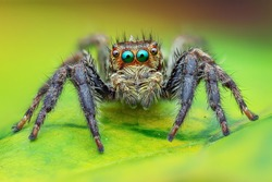 The Best shot of jumping spider