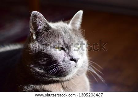 The big cat #1305206467