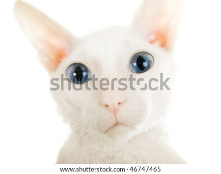 The big eyed cat on the white background