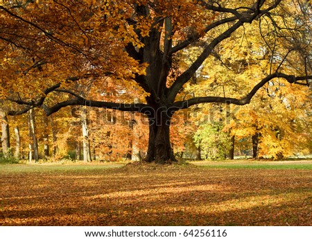 The big tree in autumn park