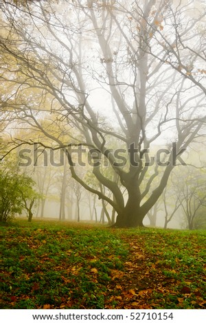 The big tree in foggy park in the autumn