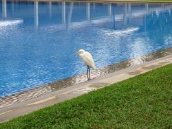 The bird close the pool, Sri Lanka, West Coast, Indian Ocean
