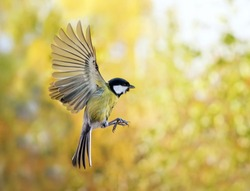 the bird flies to spread its wings on the background of autumn Park