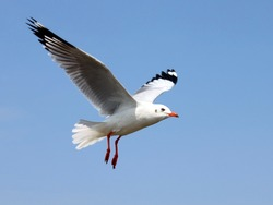 The bird flying in the blue sky.