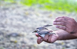 The bird had entangled its wings in a discarded net and managed to remove then rescued it later.