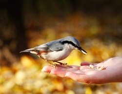 The bird on the hand in the park.