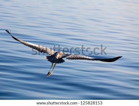 The Bird's Flight, Maldives, The Indian Ocean