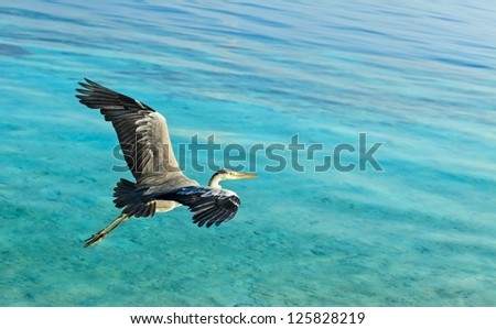 The Bird's Flight, Maldives, The Indian Ocean