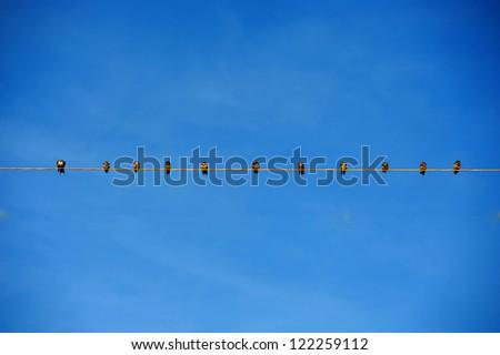 The birds in a row on blue sky #122259112