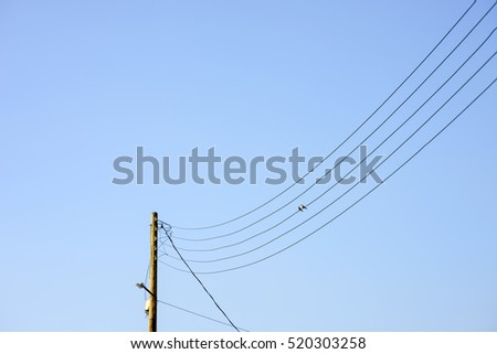 The birds on the electricity cloudy  sky background     #520303258