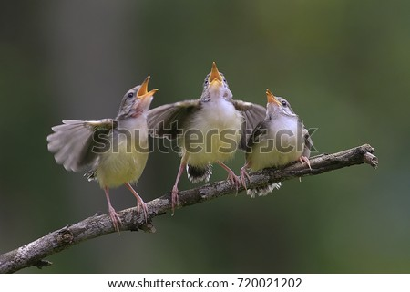 the birds singing #720021202