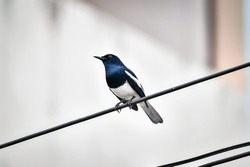 The birds that live on the city wires are active in the morning.