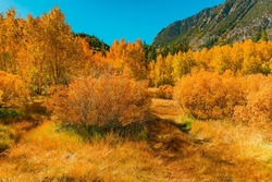 The Bishop Creek Canyon area is filled with lots of areas to discover and adventure through on a hike.