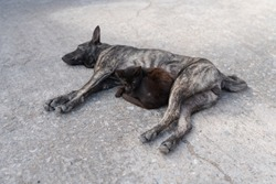 The black and white street stray dog and a dark cat are lying on the local road in the town. Concept of friendship.