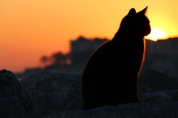 The black cat and sunset