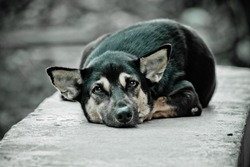 The black dog is resting on concrete wall