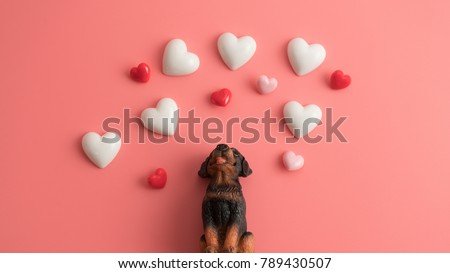 The black dog sits up to look at the floating heart with a pink background.Happy Valentines Day background.Saint Valentine's Day concept. Can be used for celebrations valentines day. #789430507