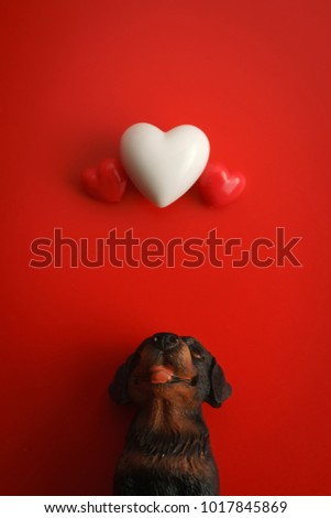The black dog sits up to look at the floating heart with red background.Happy Valentines Day background.Falling in love concept. Can be used for celebrations valentines day. #1017845869