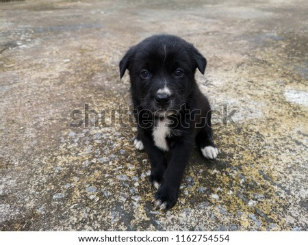 The black puppy sits waiting for owner. #1162754554