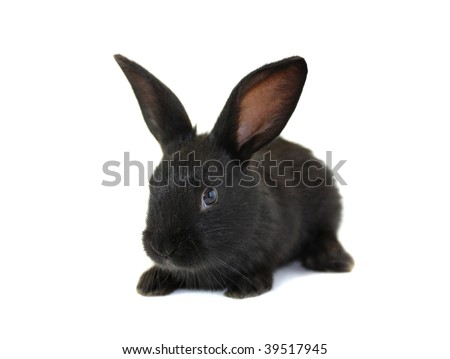 The black, small rabbit on a white background, is isolated.