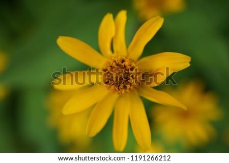 the blooming yellow flower taken by macro lens #1191266212