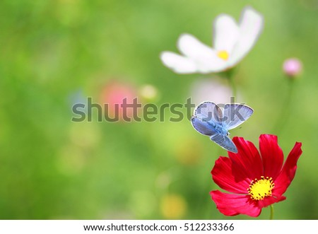 The blue butterfly near a flower on a green background. #512233366