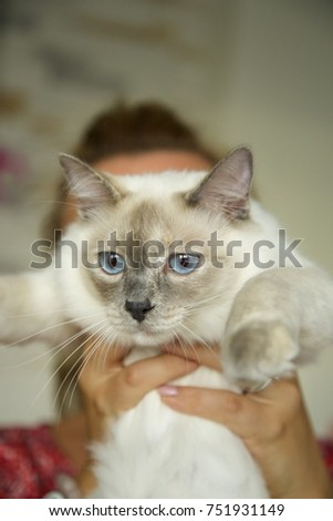 ... The blue-eyed white cat Day light. Red blanket background the latest  b1a6d b2d49 aca38f7a4