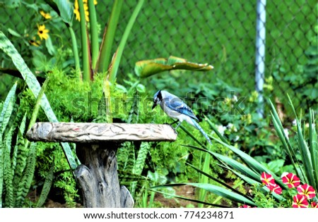 The Blue Jay #774234871