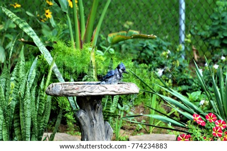 The Blue Jay #774234883