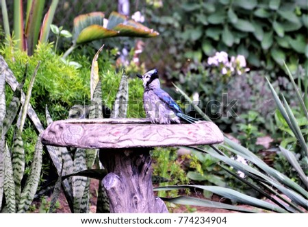 The Blue Jay #774234904