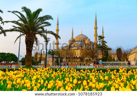 The Blue Mosque, (Sultanahmet Camii) with yellow tulips, Istanbul, Turkey.